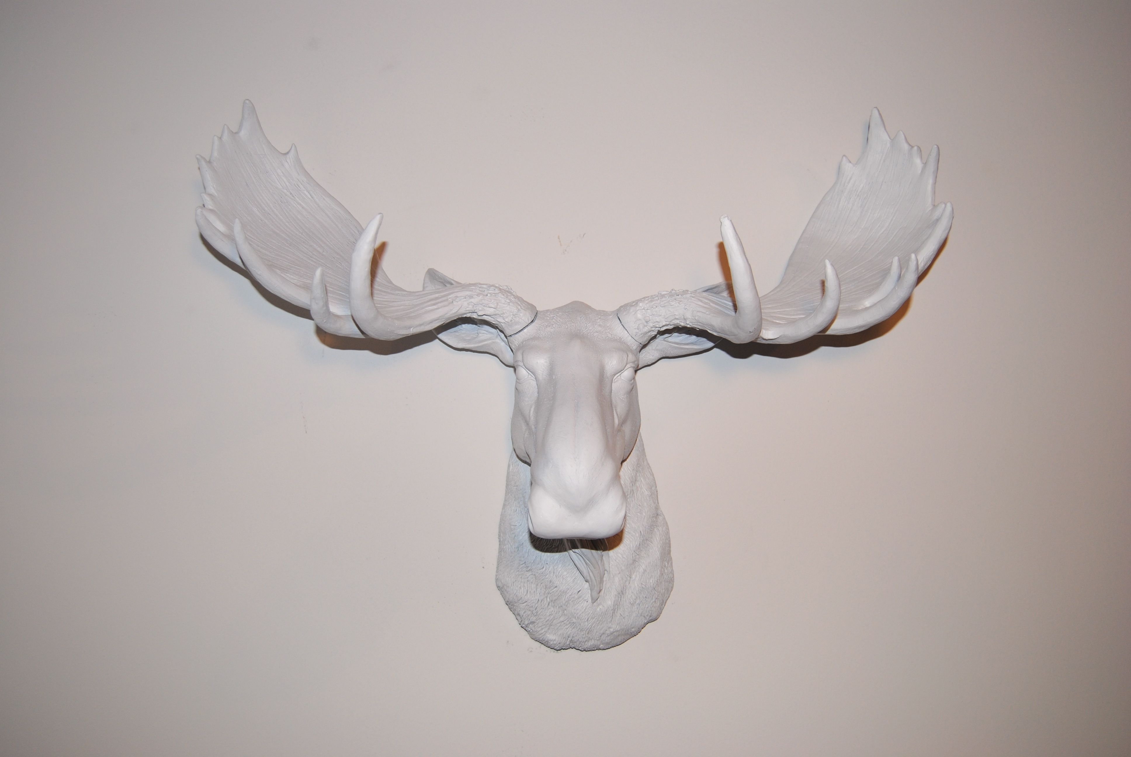 Popular Atlantis Faux Taxidermy Wall Decor With Regard To White Moose Head – White Antlers – Faux Taxidermy Moose, $ (View 13 of 20)