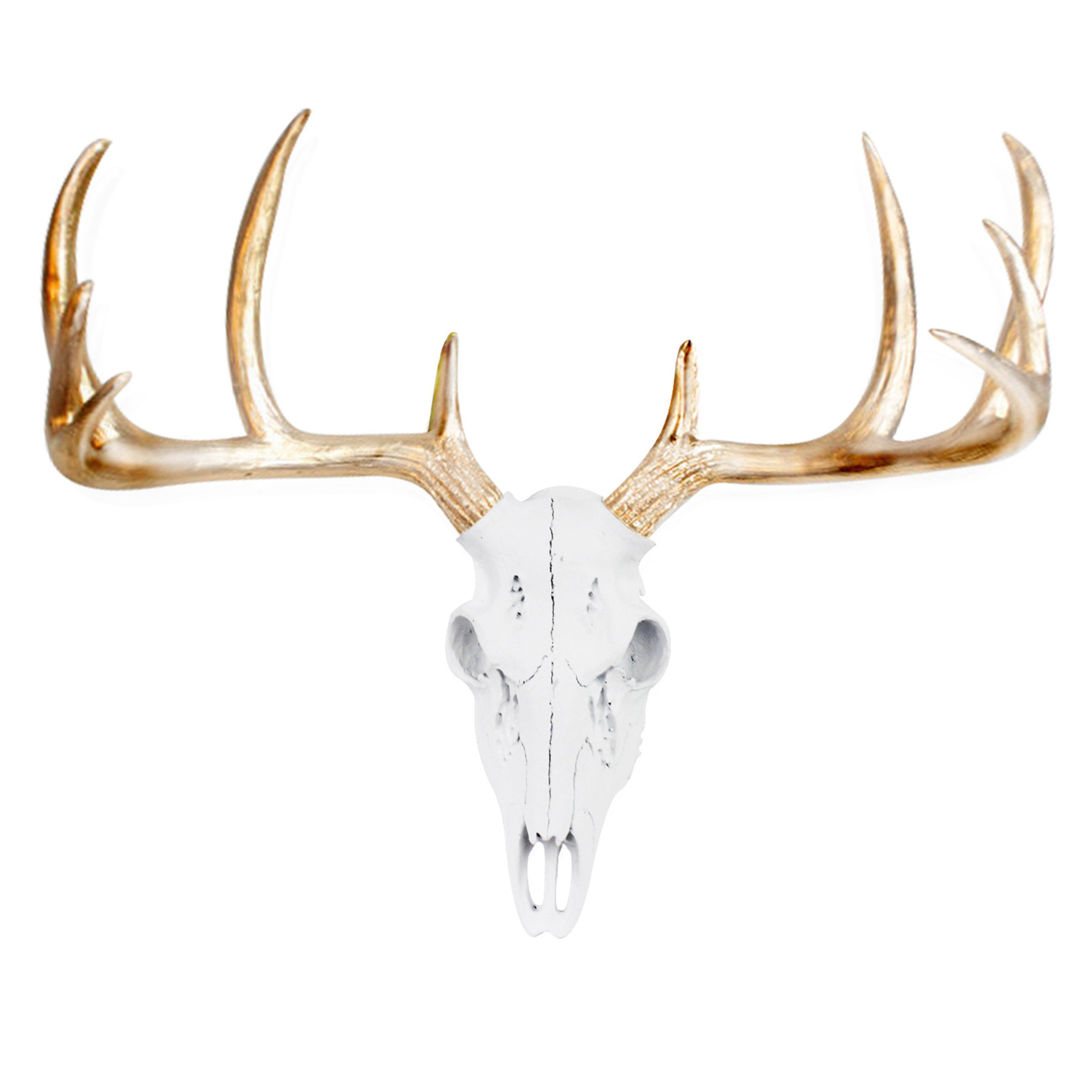 Premium Fake Taxidermy And (View 19 of 20)