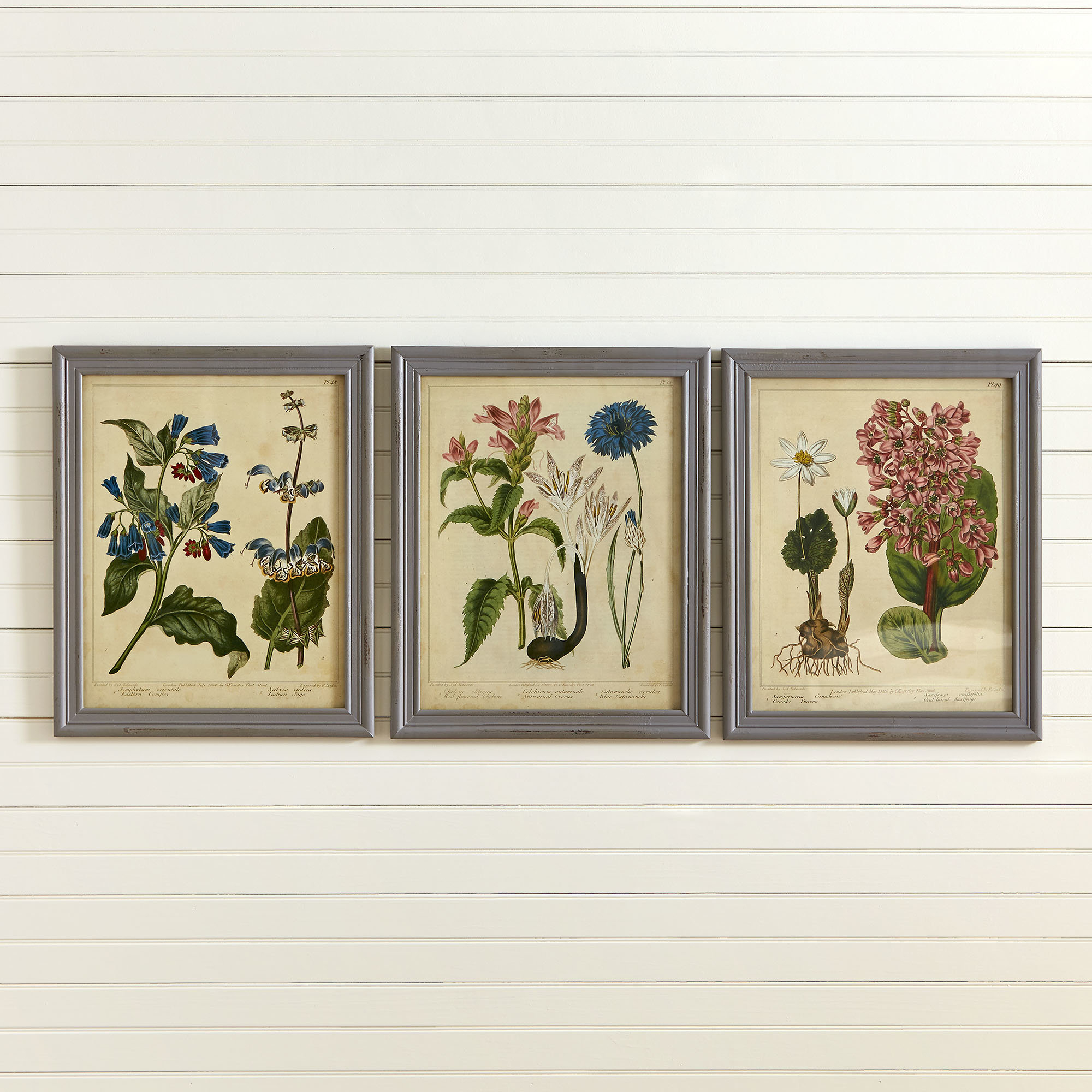 Well Liked Charlton Home 'botanical' Wall Decor Set (View 7 of 20)