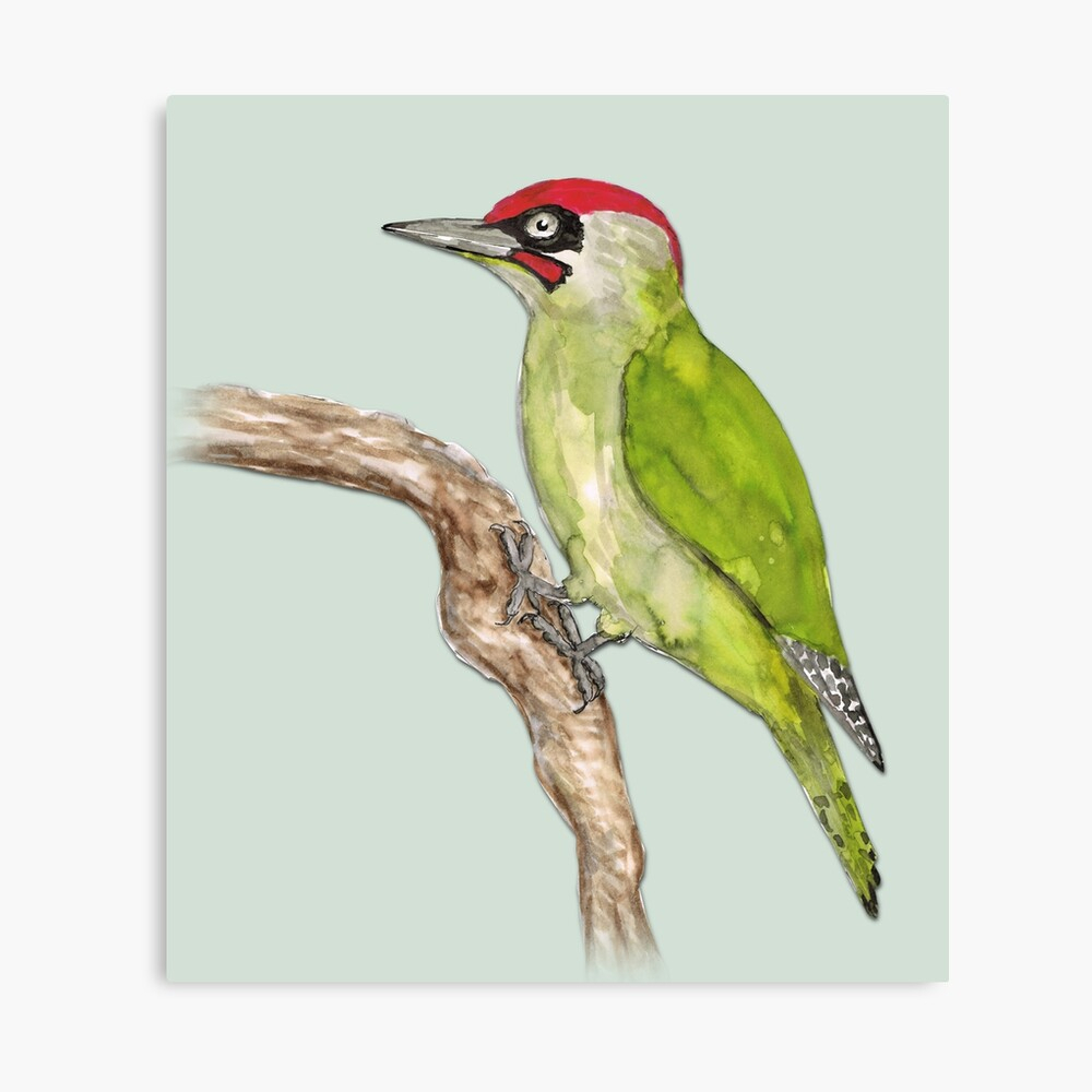 """European Green Woodpecker"""" Metal Printbwiselizzy 