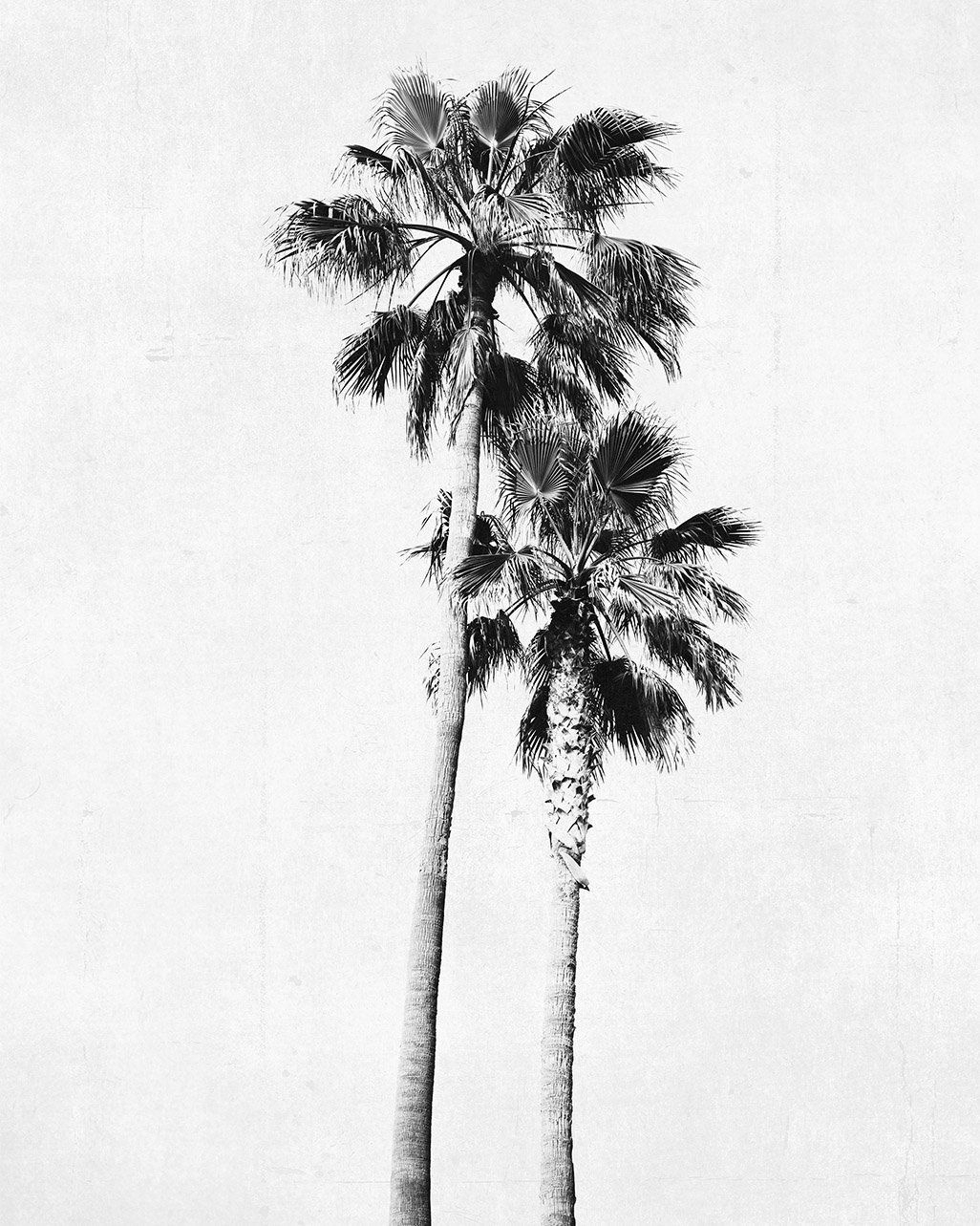 Palm Tree Photograph Vertical Print Black And White Art For 2018 Blended Fabric Palm Tree Wall Hangings (View 10 of 20)