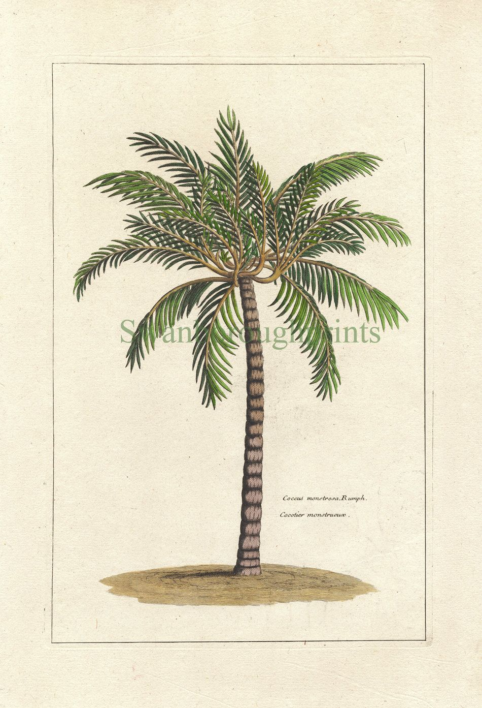 Tropical Palm Tree Art Print – Natural History – Vintage 8 X In Most Current Blended Fabric Palm Tree Wall Hangings (View 4 of 20)